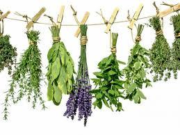 Wiosenne oczyszczanie poprzez zioła