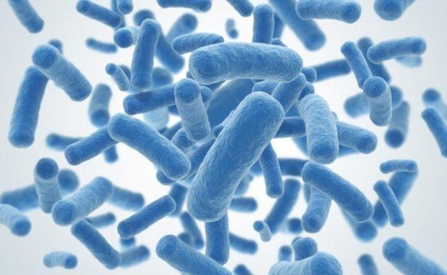 Najlepsze źródła probiotyków